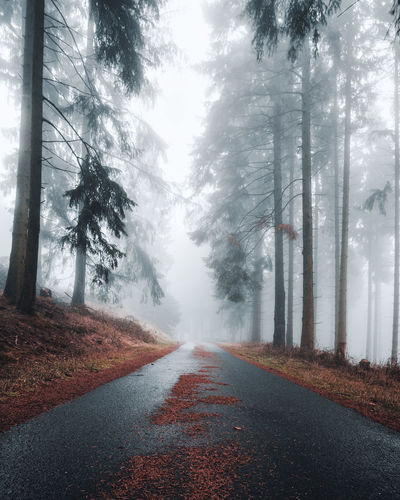 Mystical road with fir needles in a foggy and dark forest. Creepy natural background. Suitable for Horror, Halloween. Abstract, Wallpaper Autumn Background Beautiful Blue Case Colorful Dark Dark Forest Dreamy Dung Enchanted  Environment Fairy Fairytale  Fall Fantasy Fir Needles Fog Foggy Foggy Forest Foggy Street Foliage Germany Landscape Landscape Leaf Leaves Light Magic Mist Misty Misty Forest Morning Mysterious Mystic Mystic Forest Mystical Natural Nature Nobody Outdoor Path Plans Road Rural Season  Spooky Travel Tree Wood Woods