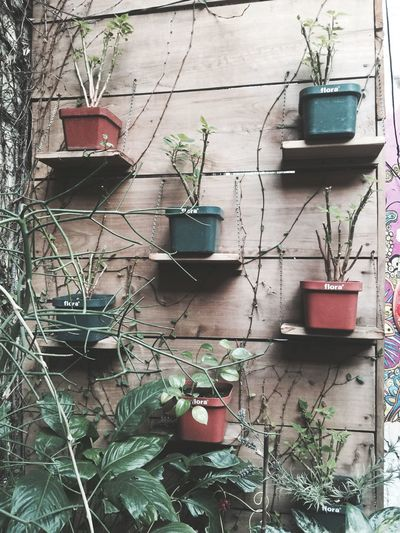 Plants are friends🍀 Plant Day No People Building Exterior Outdoors Green Color Connection Goodvibes Simmerdown ElSalvador  Resist EyeEm Diversity Long Goodbye EyeEmNewHere The Secret Spaces Resist