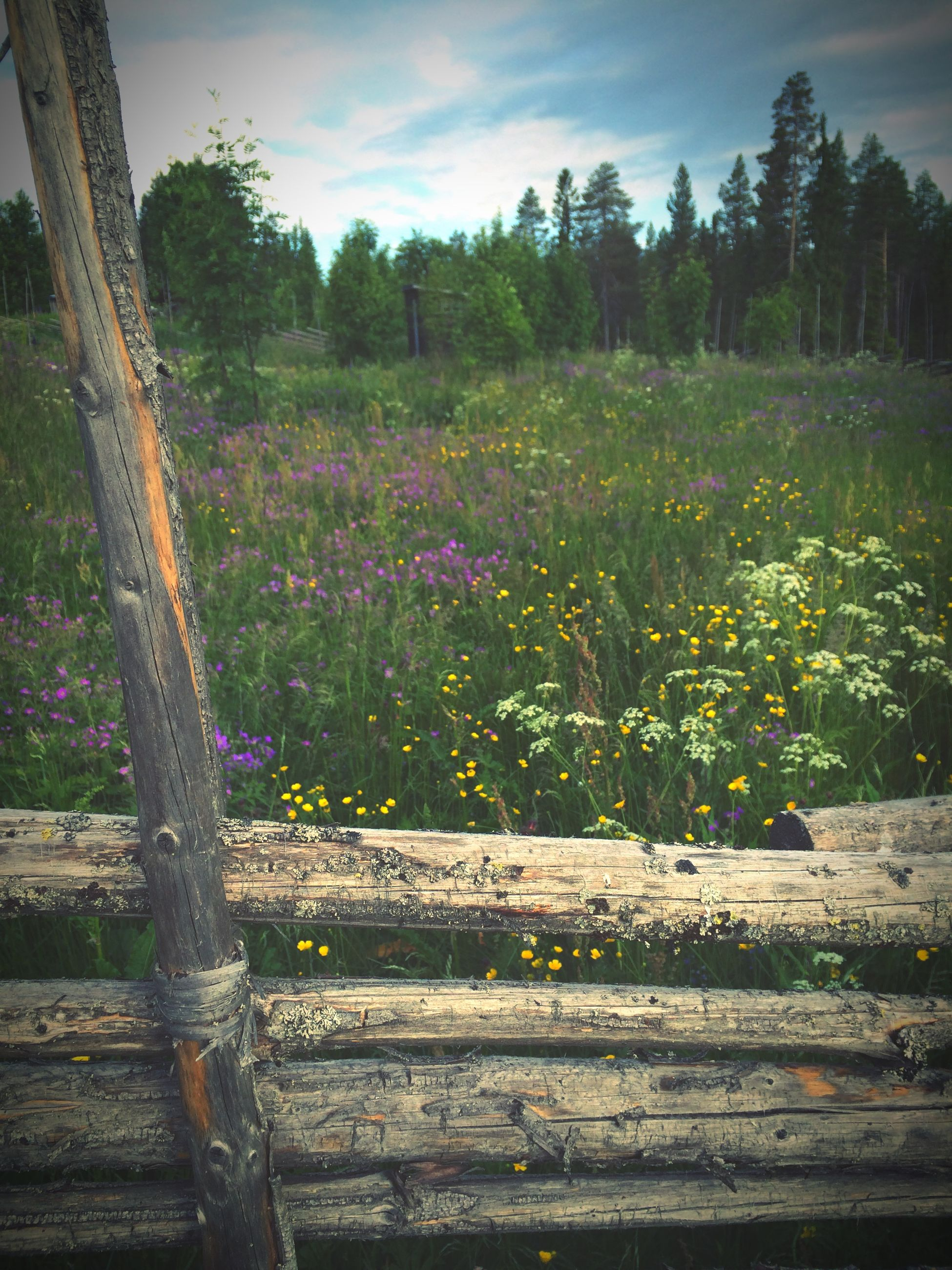 flower, growth, plant, tree, beauty in nature, nature, freshness, tranquility, wood - material, sky, tranquil scene, fragility, field, day, outdoors, wooden, landscape, park - man made space, blossom, blooming