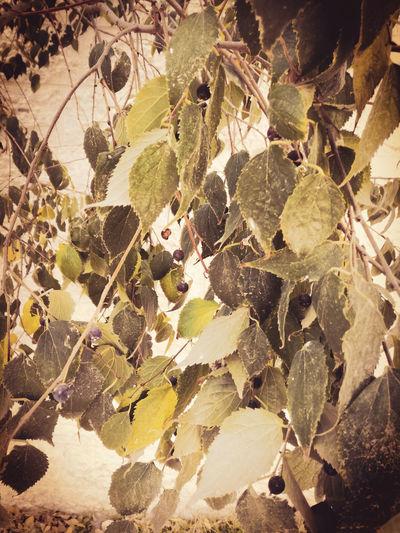 Full frame shot of dry leaves on tree