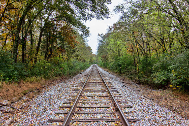 Fall Train Tracks Long Outdoors No People Day Growth Nature vanishing point Diminishing Perspective Rail Transportation Land Railroad Track Track The Way Forward Plant Direction Tree