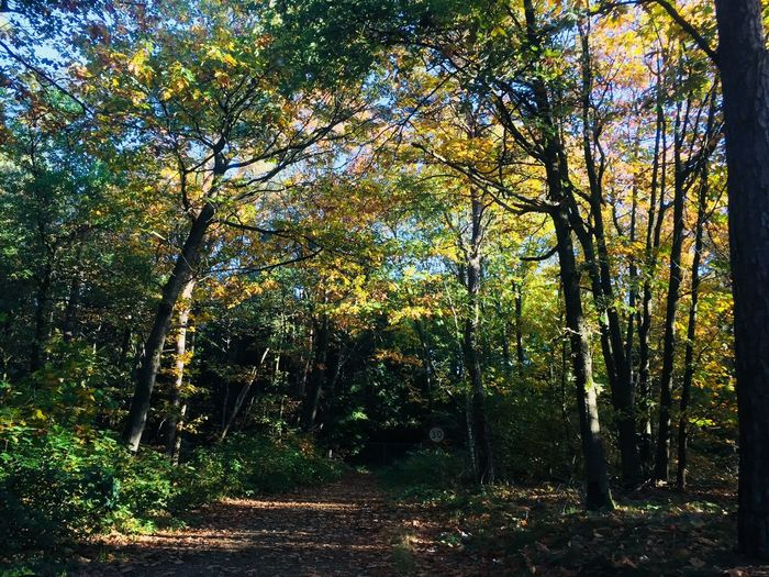 Tree Forest Nature Tranquility Beauty In Nature Growth Scenics Autumn Tranquil Scene Tree Trunk Outdoors Day Sunlight Travel Destinations Landscape Leaf Branch Sky