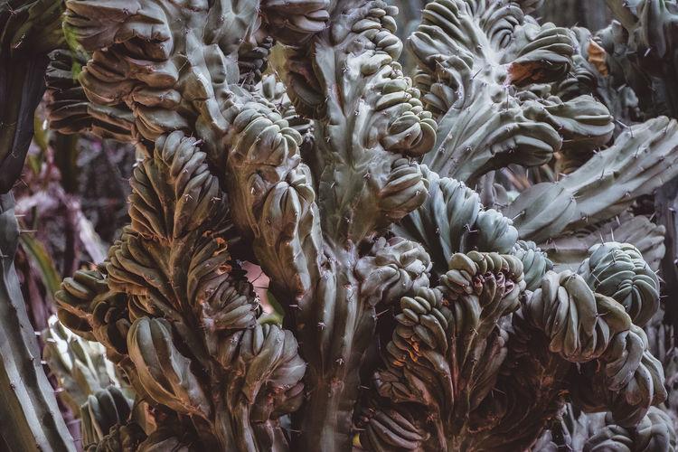Full frame shot of plants. cactus.