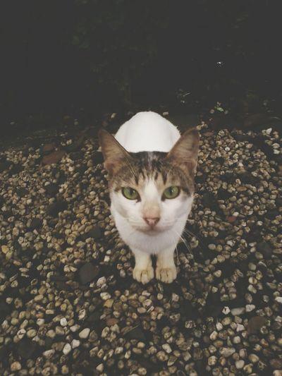 Cat AmazingCat Cats #cutecats Follow4follow