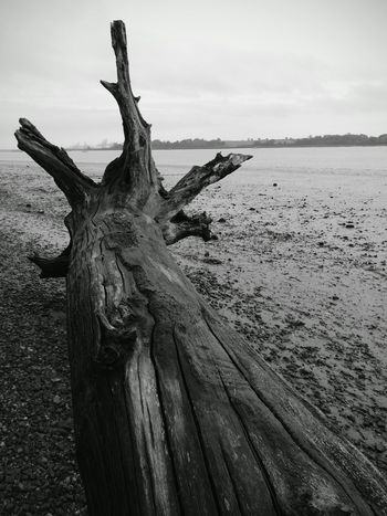 Textures And Surfaces Riverbank View Driftwood Landscape Photography Deben River, Suffolk Outdoors No People Beach Blackandwhite Photography Lowtide