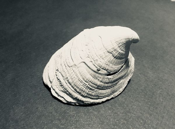 Shell No People Close-up Pattern High Angle View Animal Shell Still Life Sand Day Textured  Indoors  Seashell Animal Nature Single Object Land Animal Wildlife Fossil Animal Themes Marine