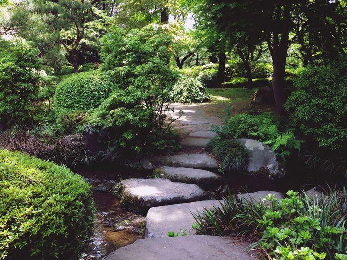 Garden EyeEm Best Shots Nature Plants Zen OpenEdit EyeEm Nature Lover Tokyo Trees Nature_collection