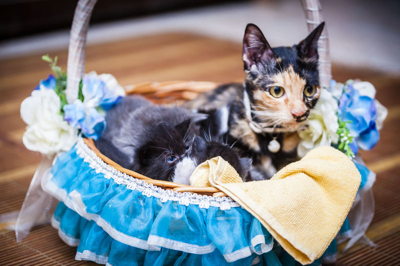 Cats in decorated basket