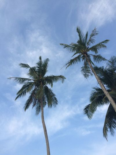 Palm trees & sky Clouds Coastline Koh Kood Nature Photography No Edit/no Filter No Filter No People Palm Palm Tree Relaxation Sky Summer Tall Trees Tranquil Scene Tropical Climate Vacations Blue Wave