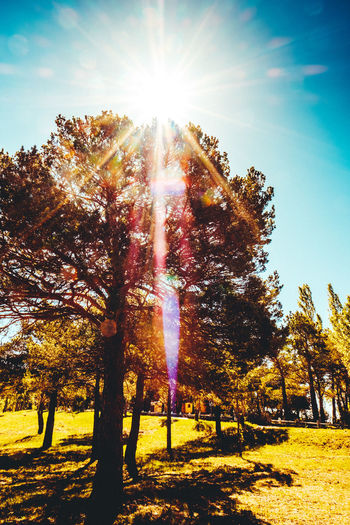 Beauty In Nature Bright Day Flare Flares Green Color Growth Lens Flare Low Angle View Nature No People Outdoors Rays Of Light Scenics Sky Sun Sunbeam Sunflare Sunlight Sunrays Tranquil Scene Tranquility Tree Tree Tree Trunk
