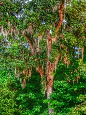 Tree TreePorn Nature Southern Charm