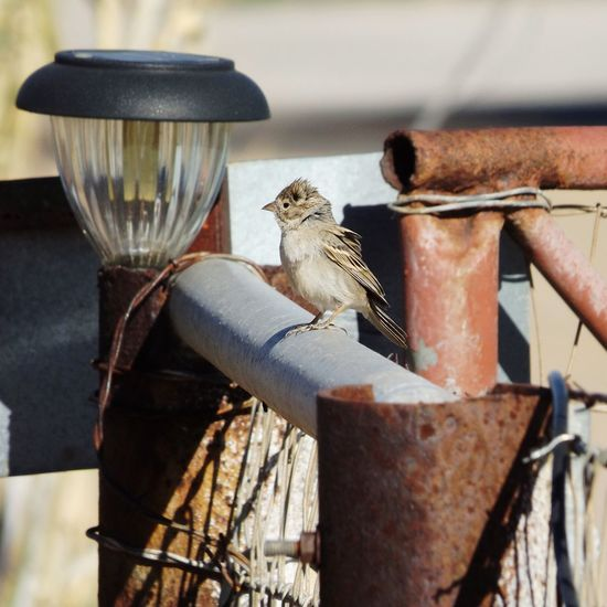Bird Perching By Rusty Metal