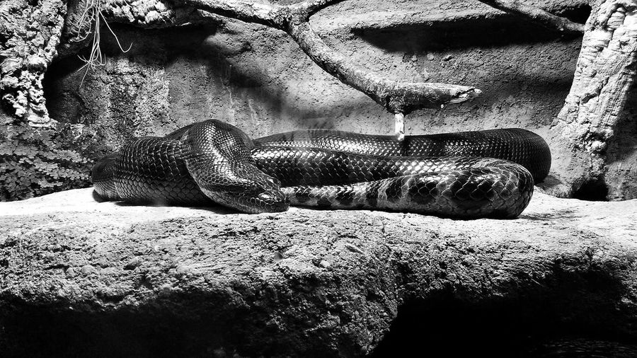 Animal Themes Animals Close-up Posion Snake Snakes Are Beautiful Zoo