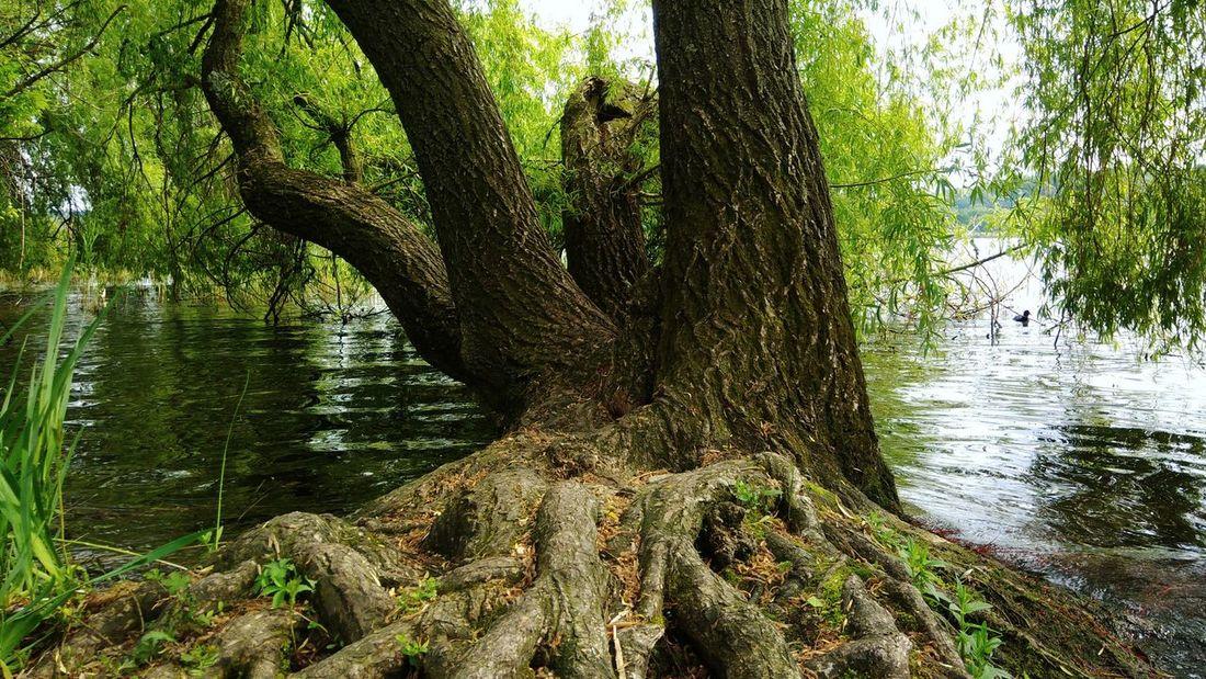 Le radici Tree Trunk Branch Close-up