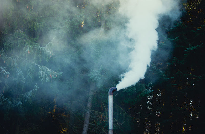 Smoke emitting from trees