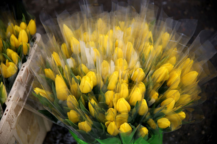 Close-up of yellow flowering plant for sale