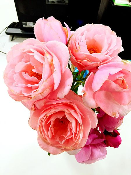 バラ 薔薇 Rosé 장미