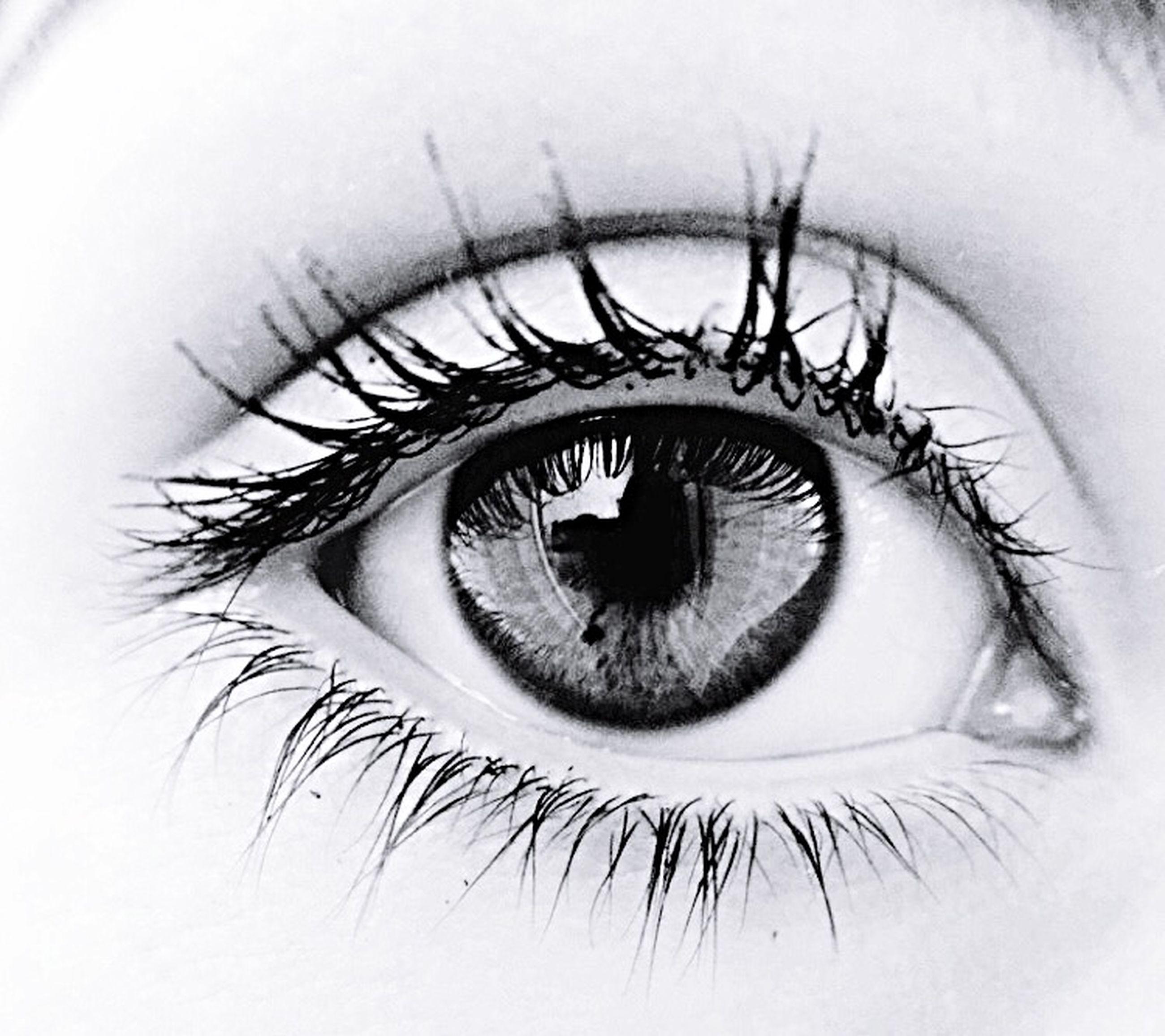 human eye, eyelash, eyesight, close-up, looking at camera, sensory perception, portrait, eyeball, iris - eye, extreme close-up, part of, vision, indoors, circle, lifestyles, human face, human skin