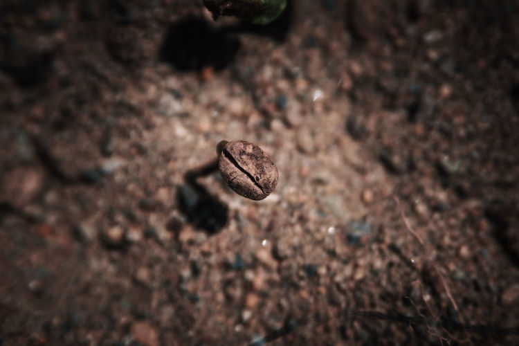 Visiting a coffee farm. From the seeds to the final export product. Close-up No People Coffee Farm Detail Cafe Green Macro Plant Nature Focus On Foreground Plant Part Full Frame Field Dry Textured  Land High Angle View Selective Focus Brown Outdoors Bean Freshness Seedling Food And Drink Springtime Decadence The Foodie - 2019 EyeEm Awards The Minimalist - 2019 EyeEm Awards