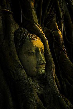 Thailand Photography Cannon600d Buddha Ayutthaya | Thailand Buddhism Oldtemples MyPhotography Nature Buddha Head