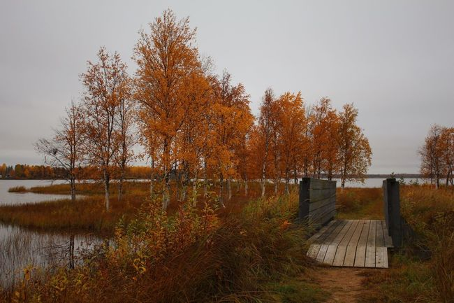 Autumn Autumn Colors Finland Lapland Autumn Beauty In Nature Built Structure Change Day Footbridge Grass Lake Landscape Leaf Nature No People Outdoors Scenics Sky Tree Water Lost In The Landscape The Great Outdoors - 2018 EyeEm Awards