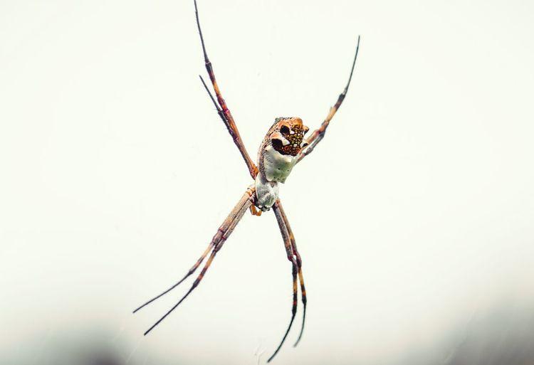 Spider in the web Photography Macrophotography Closeup Macro Pictureoftheday Photooftheday Animal Wildlife WeekOnEyeEm TheWeekOnEyeEM Week On Eyeem Arachnid Arthropod Invertebrate
