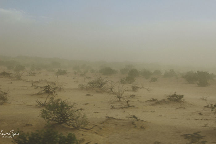 Inside a sandstorm, before the rain Field Work Grass Movimiento Nature No People Outdoors Plant Sandstorm Windy