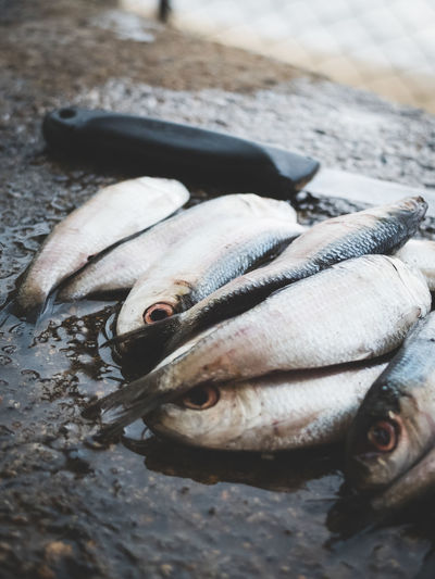 High angle view of dead fishes and knife on wet rock