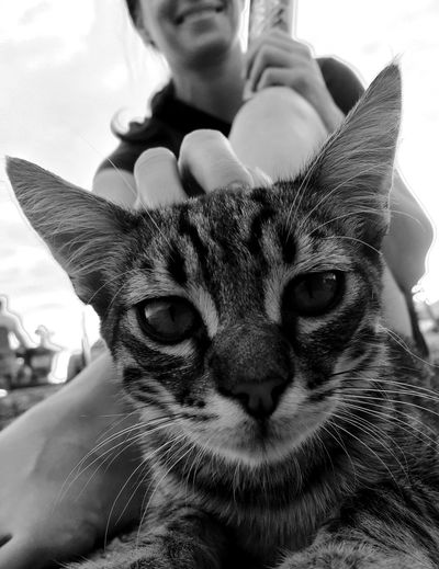 Close-up portrait of cat with hand