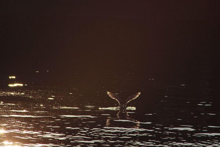 Titanic Pirates GERMANY🇩🇪DEUTSCHERLAND@ Beach Photography Meer Straße Boats Kiel Kielerwoche Way EyeEm Bird Birds Fliege Hi! Bird's Eye View