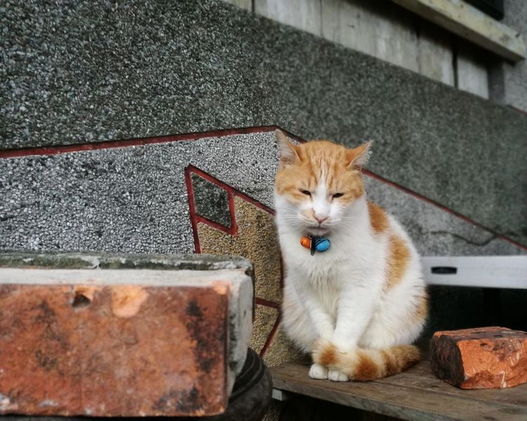 She looks so cold Cats Catslife Houtong Houtong Cat Village Taiwan