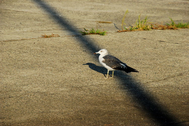 High angle view of bird perching on street