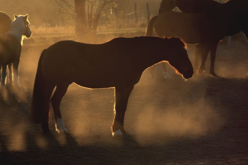 Nice light and shadow Sunset Silhouettes Sunset Golden Hour Mammal Animal Animal Themes Domestic Animals Animal Wildlife Vertebrate Domestic Horse Nature Livestock One Animal No People Side View Full Length Day Outdoors Silhouette Herbivorous Sunlight