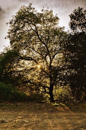 Forest Tree Picoftheday