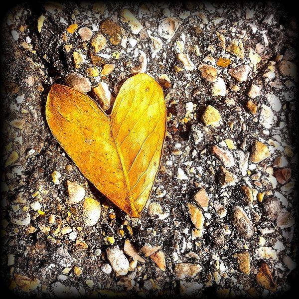 un cuore naturale Valentine's Day - Holiday Love Romance Heart Shape Close-up