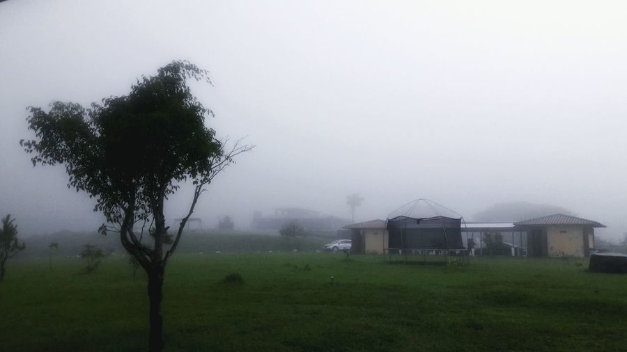 Neblina... Fog Agriculture Grass Social Issues Field Landscape Tree Torrential Rain Rural Scene Outdoors No People Nature Irrigation Equipment Day