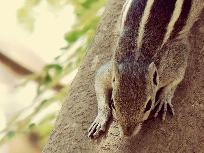 Squirrel Animals In The Wild Nature Close-up Tree In Bengaluru,india EyeEmNewHere