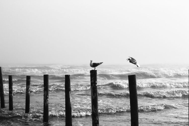 Birds perching on wooden post at beach against sky