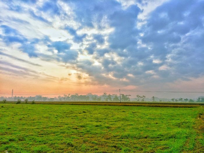 Bird Rural Scene Cereal Plant Rice Paddy Sunset Agriculture Field Flock Of Birds Flamingo Sky Cultivated Land Farmland Plantation Combine Harvester Agricultural Field Farm Growing