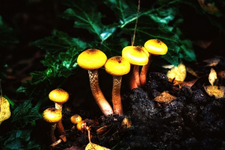 Close-up of mushrooms growing on plant at night