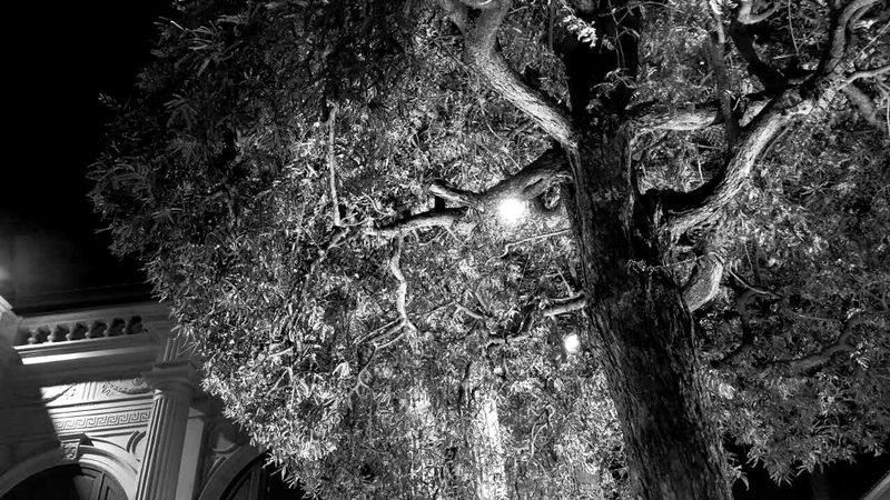Nightmare Tree Outdoors Architecture No People Nature Beauty In Nature Night Lights Nightphotography Night View Nightmare Monochrome Black And White Collection  Black & White Photography Black & White EyeEmNewHere Break The Mold