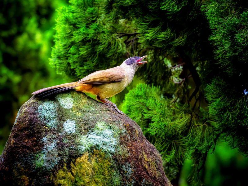 Bird Photography Birds_collection Birds Of EyeEm  Bird Watching Wildlife & Nature Animals In The Wild Animal Photography Birds Wildlife Bird Singing