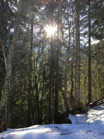 Beauty In Nature Forest Nature Outdoors Scenics - Nature Snow Tranquil Scene Tranquility Tree WoodLand