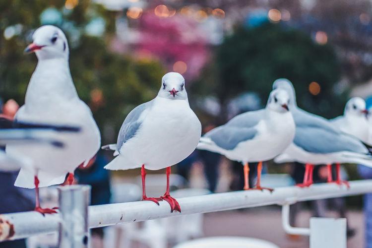 Seagulls perching on railing