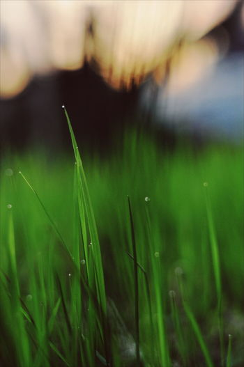 Rice Paddy Cereal Plant Rural Scene Water Wheat Agriculture Field Crop  Close-up Grass Cultivated Land Rice - Cereal Plant