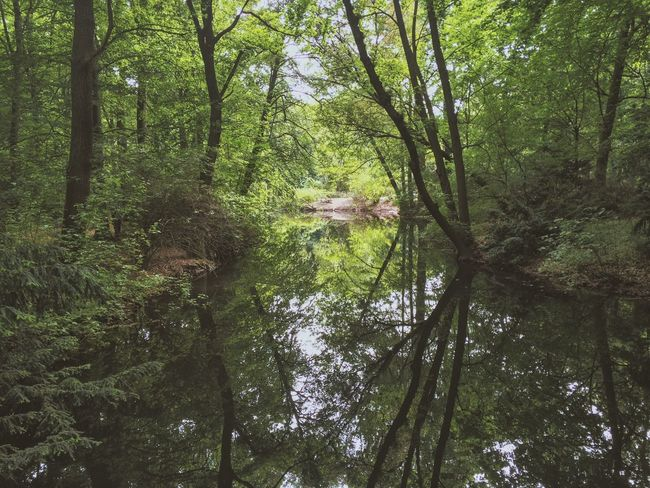 Reflection Forest Can't See The Forest For The Trees Travel Photography Exploring Explore Berlin Germany Cool Summer