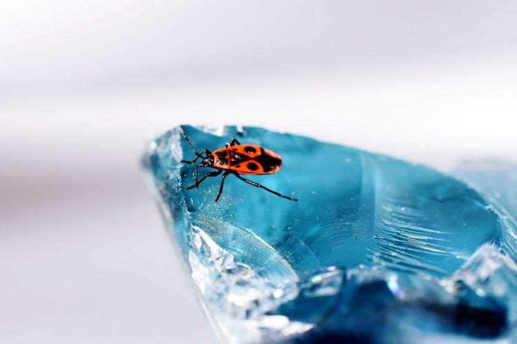 Close-up of bug on stone