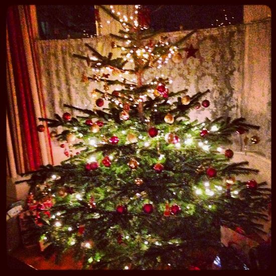 Decorated real Christmas tree ready for the festive season Baubles Christmas Tree Close-up Decor Decoration Decorations Festive Flower Fragility Growth Happy Holidays Illuminated Multi Colored Nature No People Ornate Pink Color Plant Real Tree Xmas Time Xmas Tree