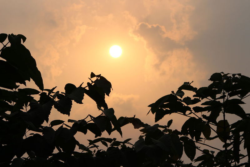 The sun goes down the stars come out, and all that counts is here and now... Sun Sunset Leaf Leaves Tree Silhouette DSLR Photography Canon Canonphotography Canon700D Canonindia Dusk Dim Light Sky Celestial Autumn Colors Autumn Highway Likeforlike Followforfollow Like4like