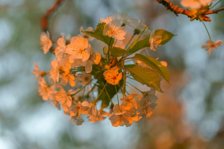 Backyard beauties in the sunset. Tranquility Norway EyeEm Gallery Flower Tree Water Branch Leaf Autumn Close-up Plant Blooming In Bloom Botany Petal Growing Stamen Pollen Blossom Plant Life The Great Outdoors - 2018 EyeEm Awards